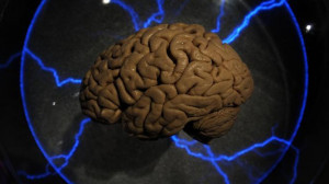 brain-memory-research-darpa.si.si